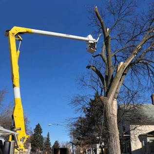 Tree trimming services in Maple Grove, MN
