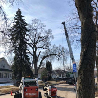 Tree trimming in Maple Grove, MN