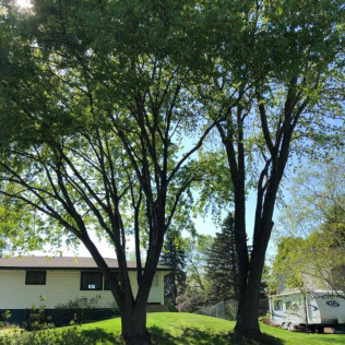 Tree maintenance services in Maple Grove MN