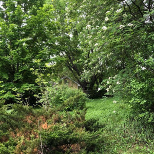 Tree maintenance in Maple Grove, MN