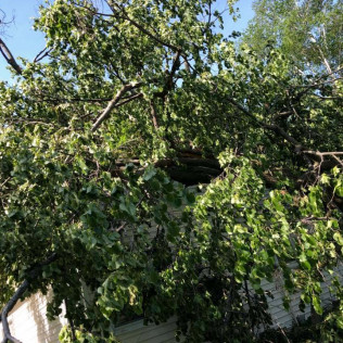 Hazardous tree removal in Maple Grove, MN