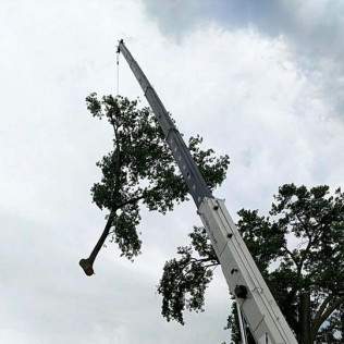 Tree services in Maple Grove, MN