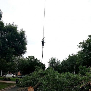 Tree Services Maple Grove, MN