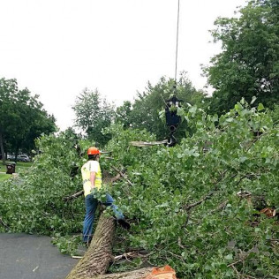 Tree removal services in Maple Grove, MN