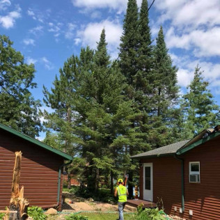Tree experts in Maple Grove, MN