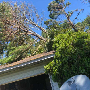 Emergency tree removal in Maple Grove, MN