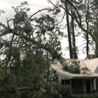 Emergency tree services in Maple Grove, MN