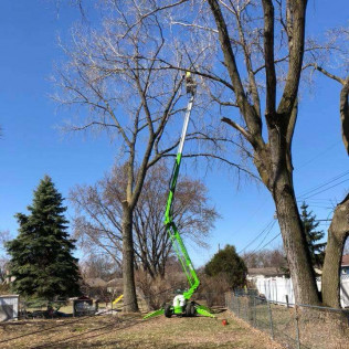 Tree Removal Maple Grove, MN