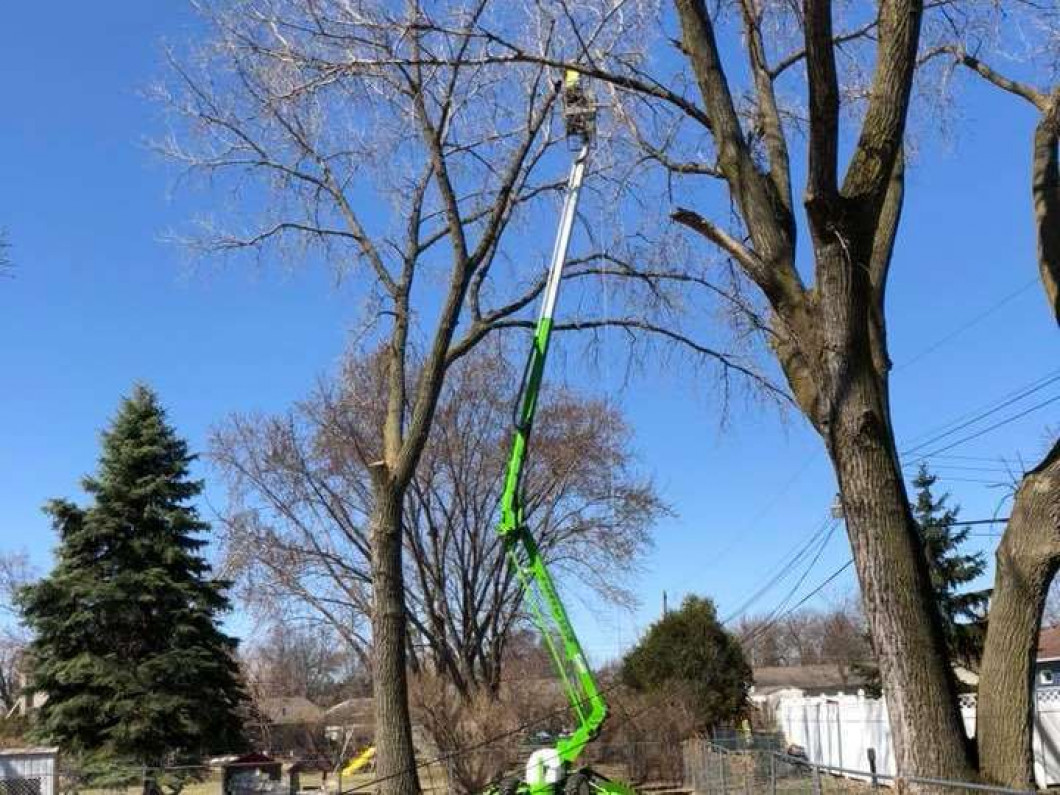 The benefits of trimming and pruning your trees